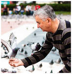pigeons by salleephotography