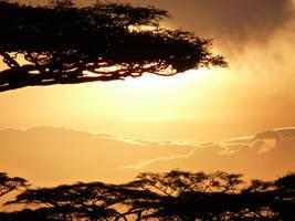 Sunset in Savanna by Rasient