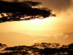 Sunset in Savanna