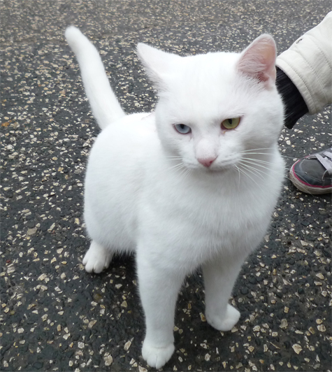 Disabled Cats For Adoption Scotland