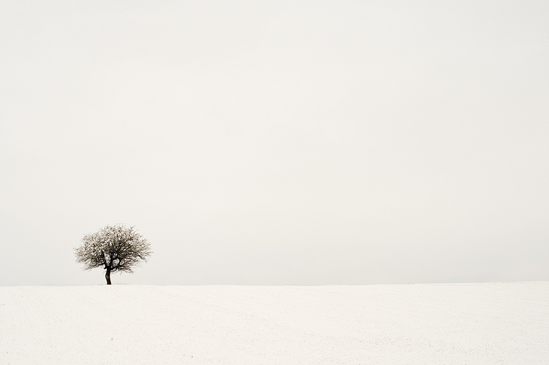 Winter tree by NickKoutoulas