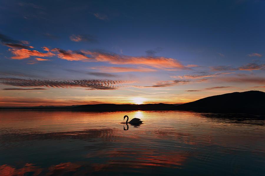 Swan on sunset lake by NickKoutoulas