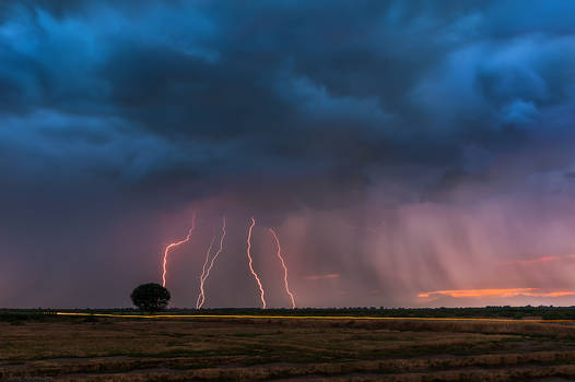 Lightning storm over the tree