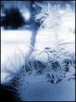 Winter moment : 20 by DecoyRobot