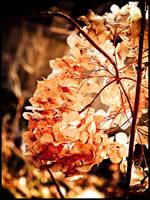 Autumn dies : 09 by DecoyRobot