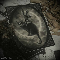 Dark Cat by Derek-Castro