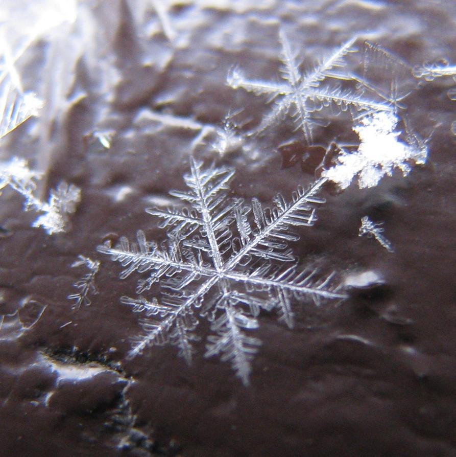 snowflake VI by Samantha-Jules