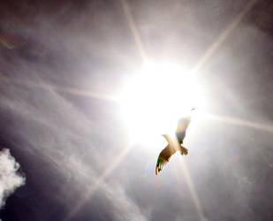 Solar by Zanora-zara