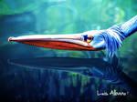 Pelicano by LuisAlbano