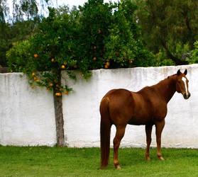 Rocket and the Orange Tree by Sheepsaymoo