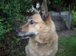 Dog 02 by Cebulon