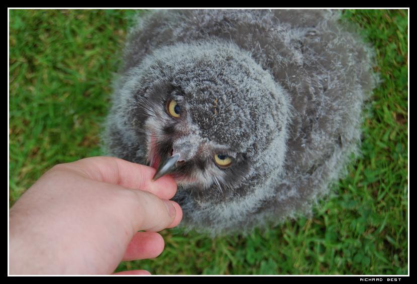 Cute baby white owl - photo#55