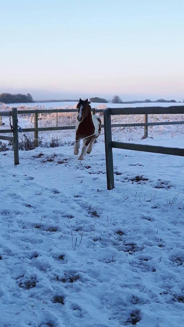 Balder's winter time 1 by JovaArt
