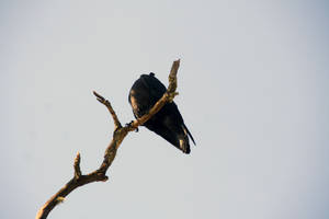 Headless Bird by Datasmurf