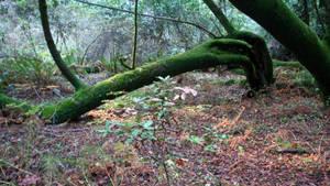 In Muir Woods 3 by Datasmurf