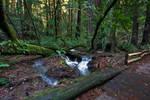 In Muir Woods 8