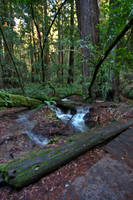 In Muir Woods 10