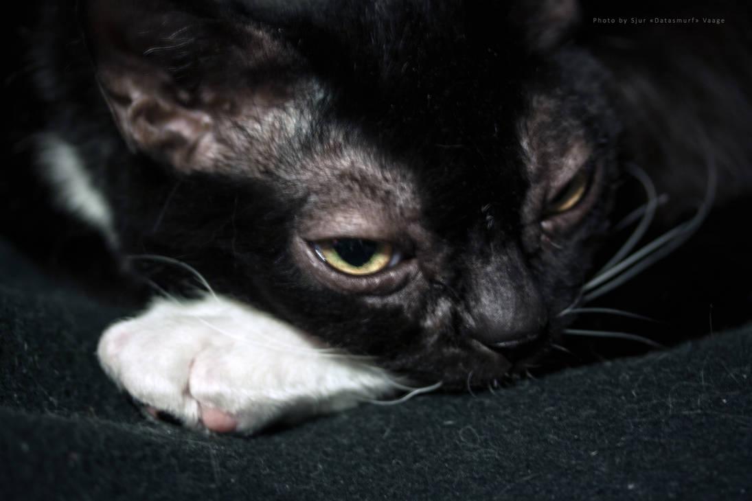 Black cat on black blanket by Datasmurf