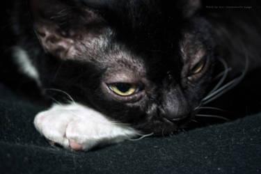 Black cat on black blanket
