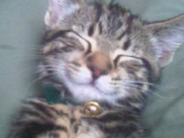 dreaming kitten by sleepybutterfly