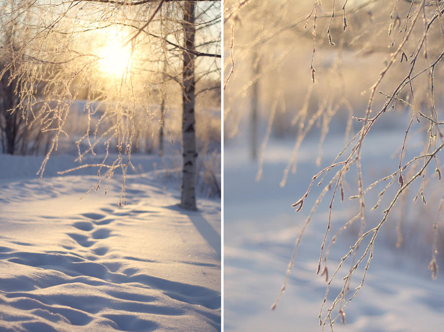 winters light Winter's gifts of light december 13, 2017 3:27 pm 2 comments as it often happens, christmas and hanukkah overlap this holiday season hanukkah and christmas both are traditional religious.