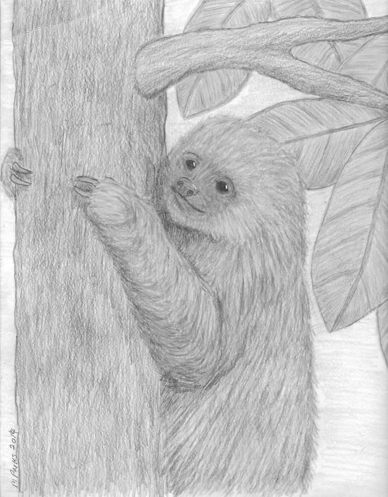 Baby 2 toed Sloth black and white by EvilScarrlett