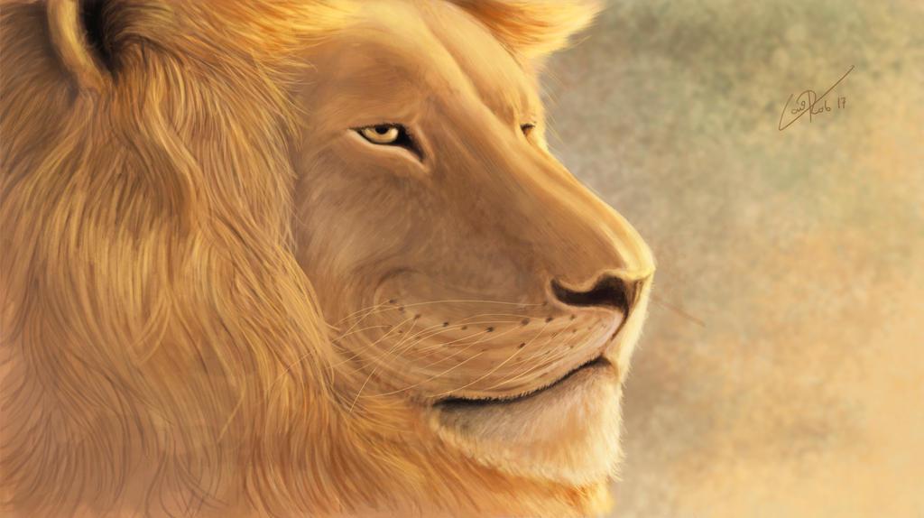 Lion awaits