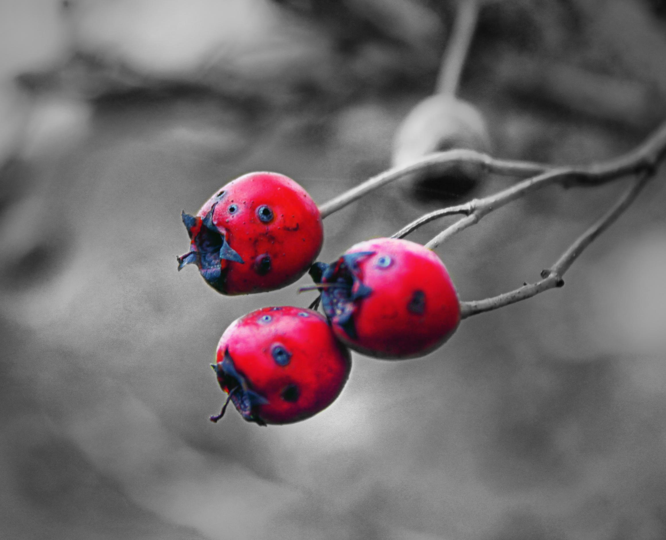 Red by NINJAIWORKS