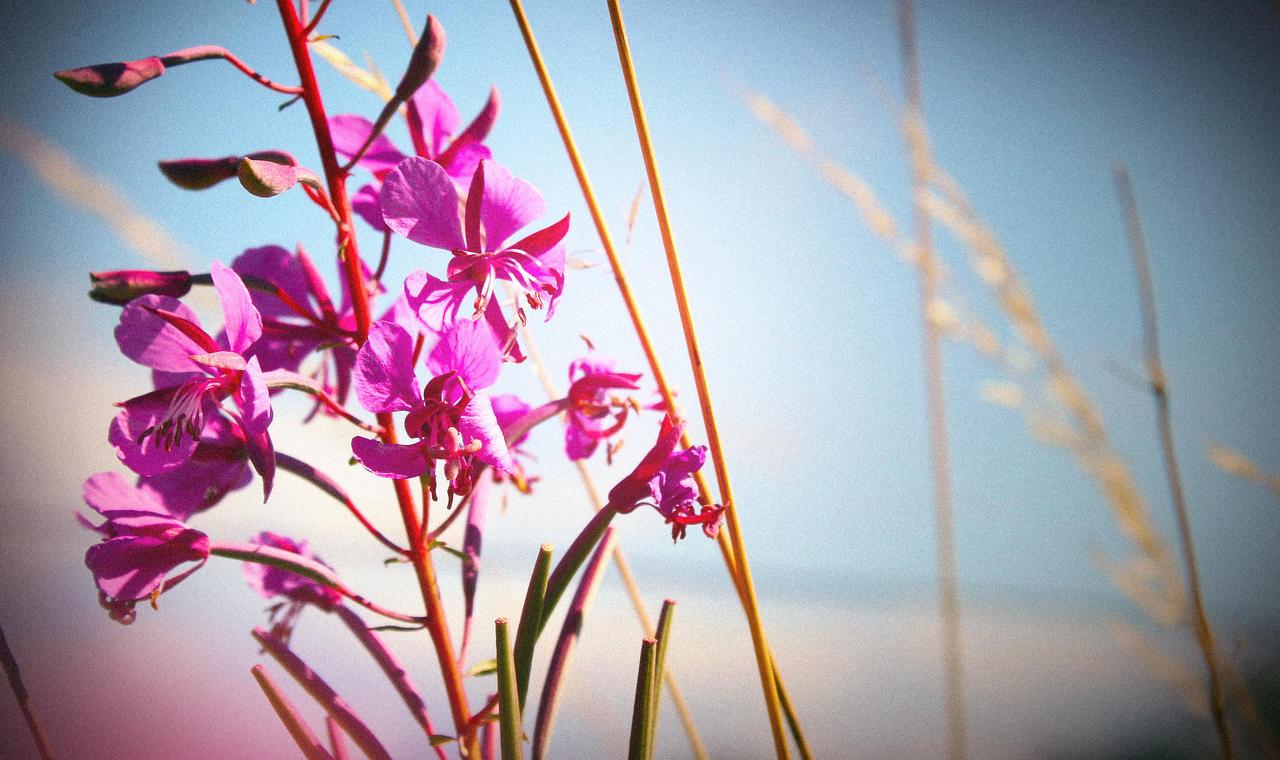 Summer Flowers by NINJAIWORKS