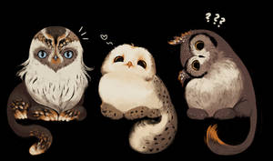 OPEN / Owlcats III
