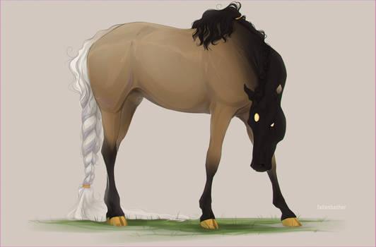 Curious stallion | YHH