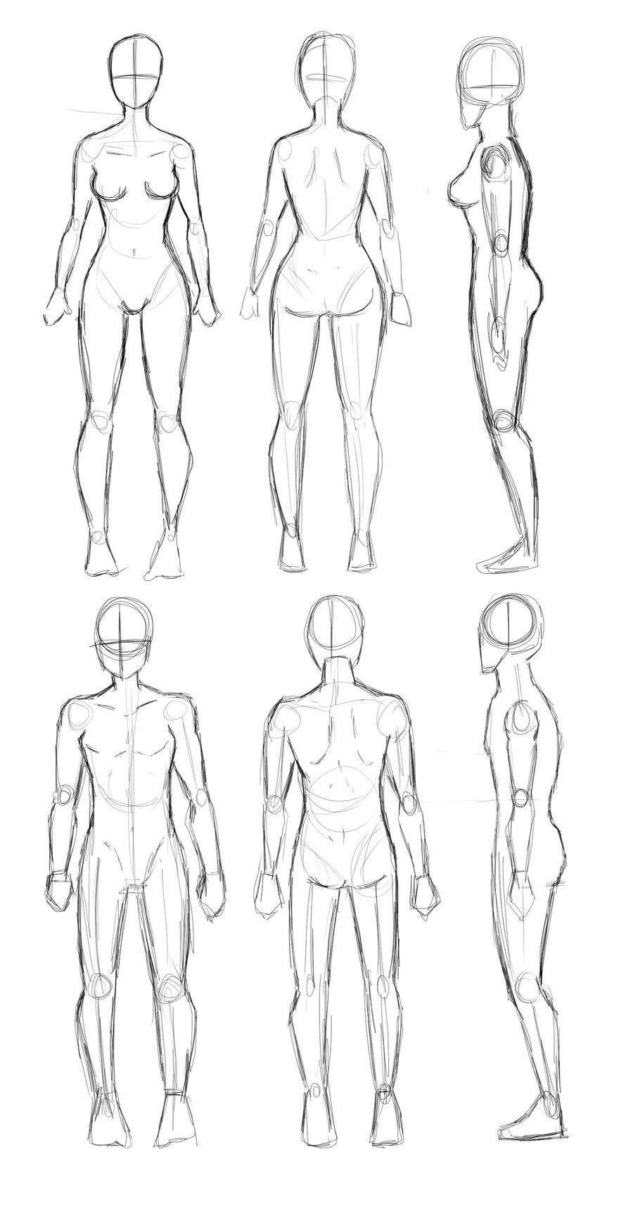 Anatomia y proporciones mejoradas by JaelynGS on DeviantArt