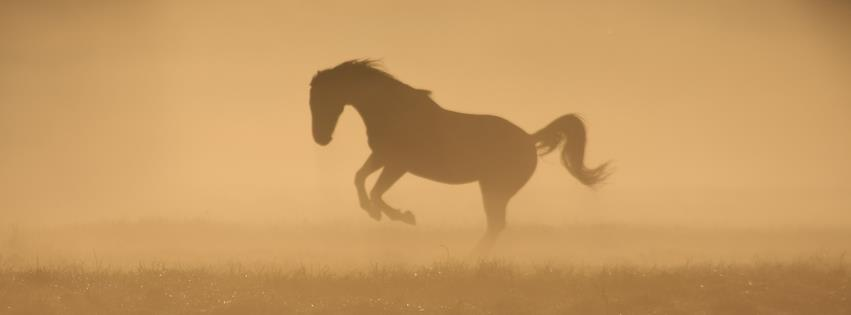 Misty 'N' Fog by CabelaOnly