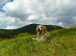 golden mountains II