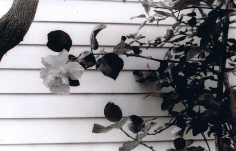 Flower In Bloom by jade-alicia
