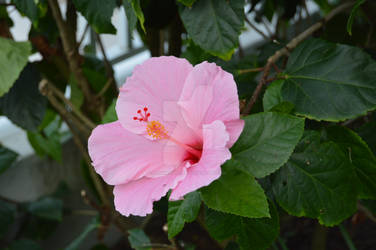 Pretty Fleur