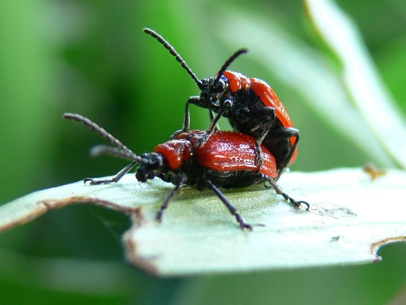 bugs by wojcieh