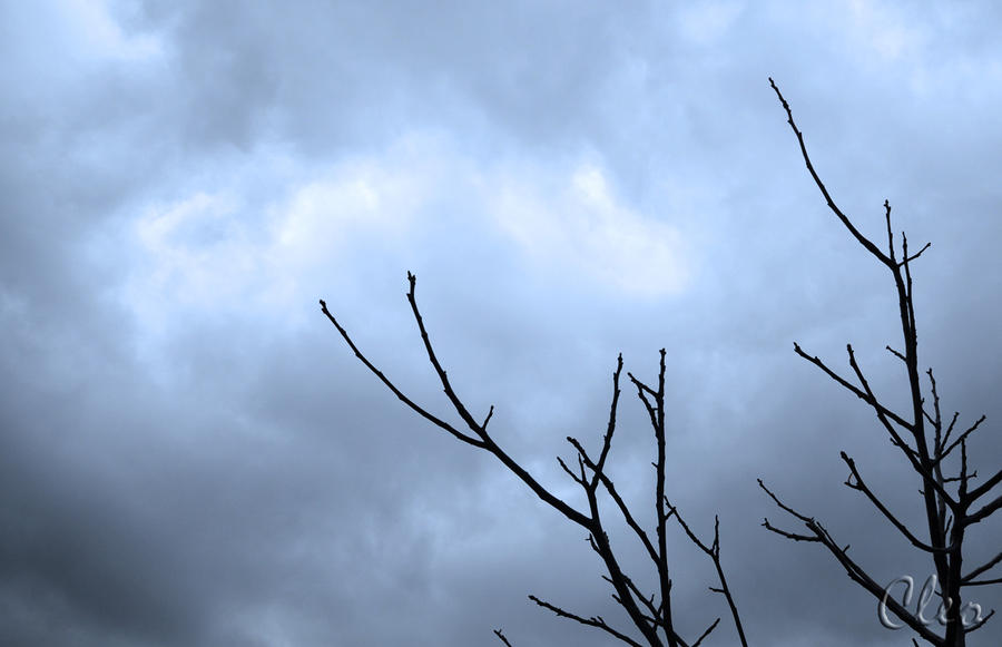 branches by cleo72