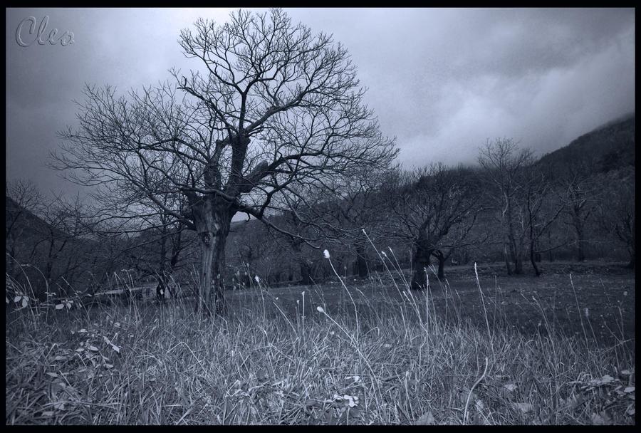 a tree by cleo72