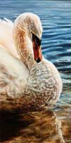 Study of a Swan by Earleywine