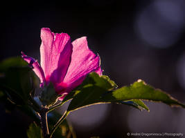 Translucent by DrAndrei