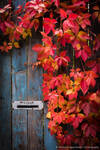 Message from Autumn by DrAndrei