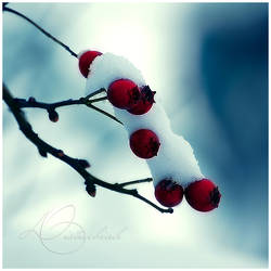 Frozen Berries by Lady-Tori