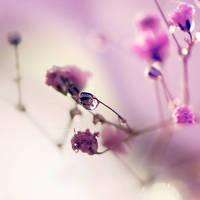 Sweet Symphony by Lady-Tori
