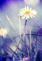 Lavender Blossom by Lady-Tori