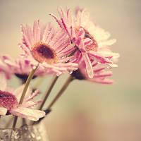 Small Harmonies by Lady-Tori