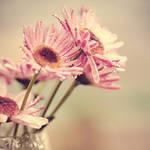 Small Harmonies