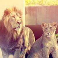 Lions Pride by Lady-Tori