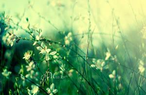 Fireflies by Lady-Tori