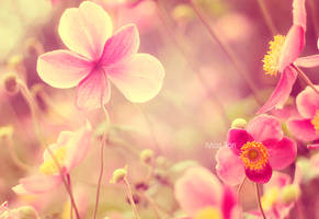 Happiness by Lady-Tori